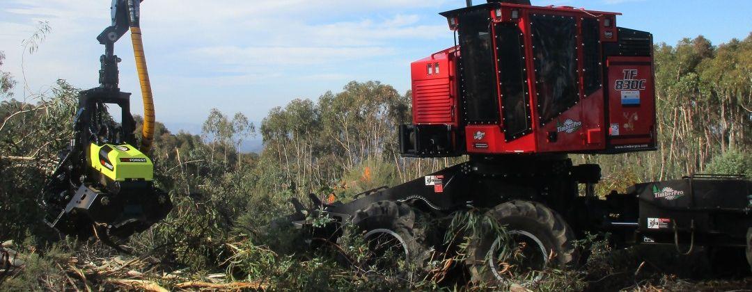 AFM 60 Euca harvesting head in Spain